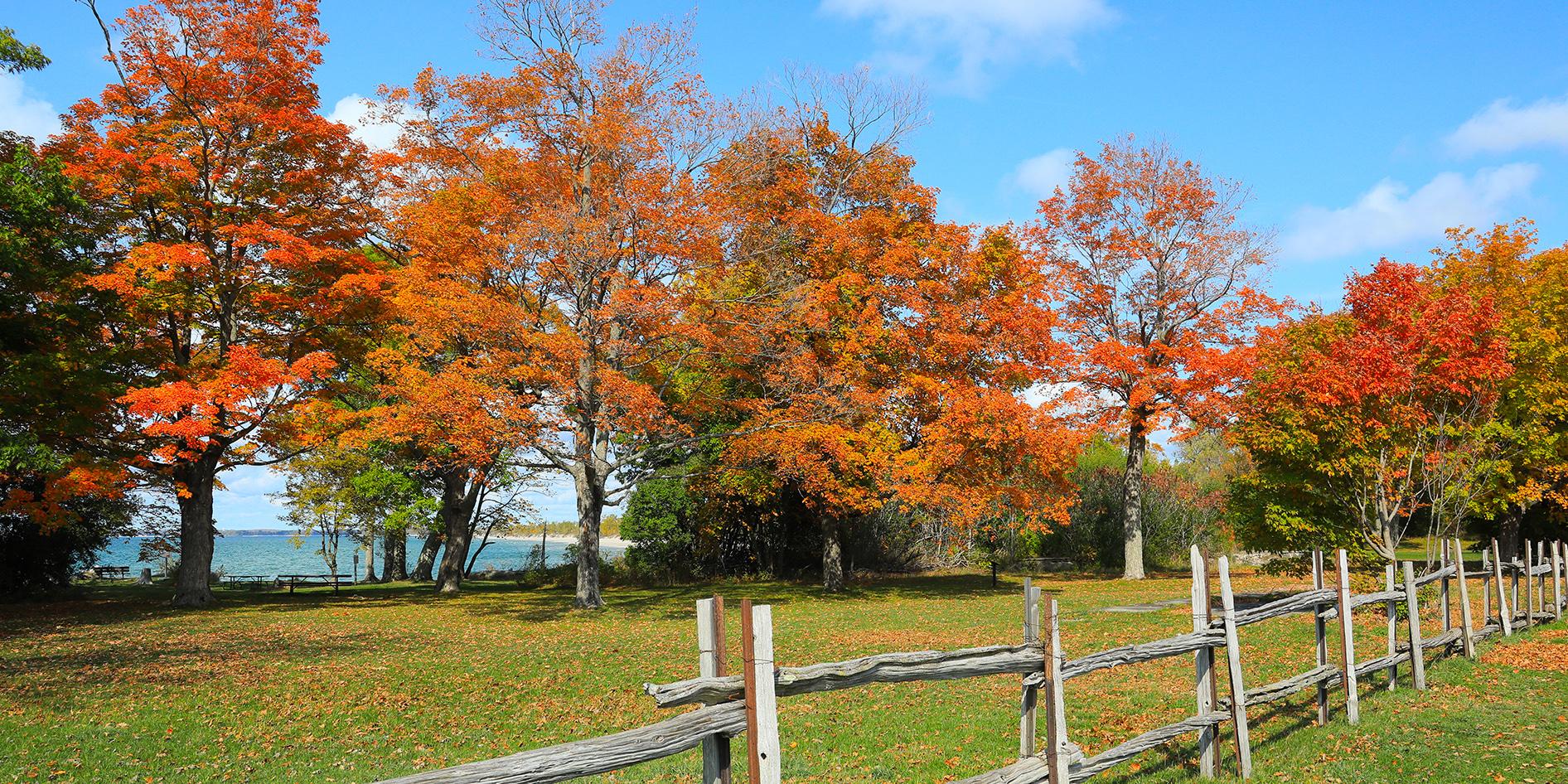 Fall at Lakeshore Lodge